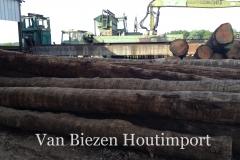 robinia houten stammen